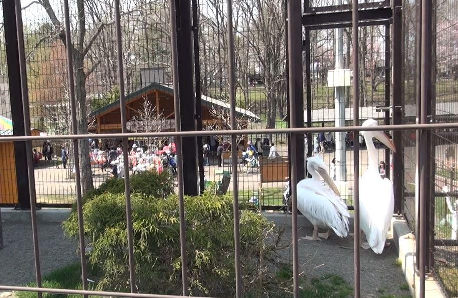 のんびり楽しむ帯広動物園と桜並木