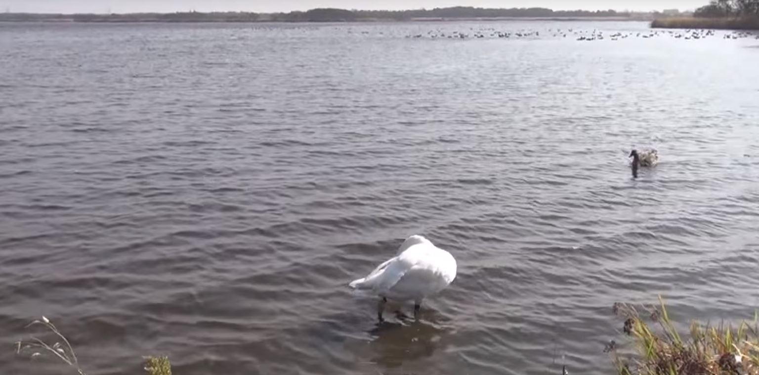 北海道 ウトナイ湖 動植物・野鳥の宝庫