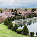 """桜で有名な墓所公園""""戸田記念墓地公園"""